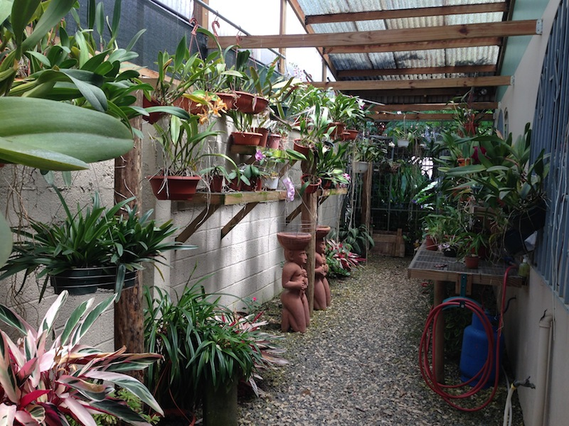 3 orchid nursery north