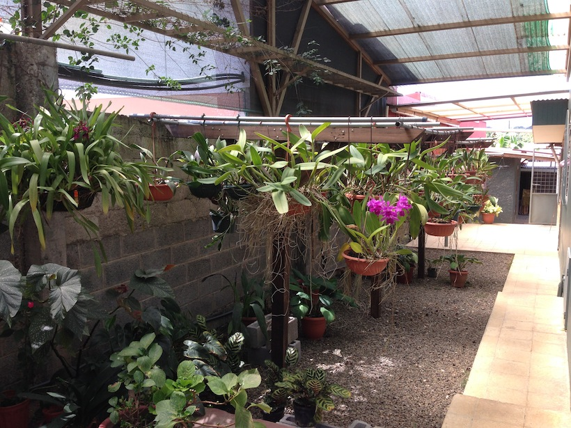 4 orchid nursery south