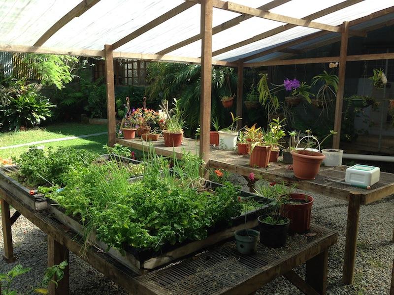 5 veg-herb garden 2